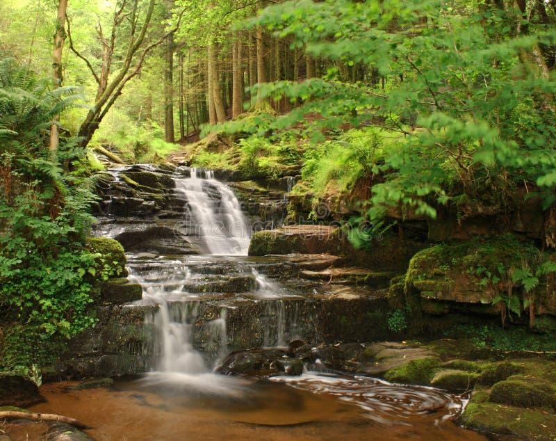 vattenfallskogsmark royaltyfria bilder