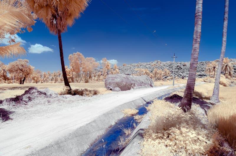 Vattenkanal som kör mellan en padda och risfältfält fotografering för bildbyråer