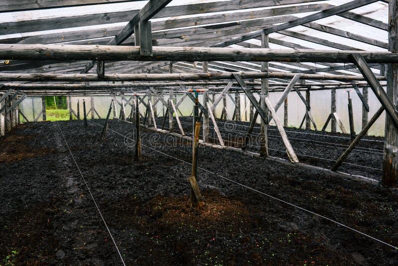 Vattenklapp som bevattnar växterna i ett växthus Automatisk spridare med gummislangen Bespruta vatten till plantor Bevattna tr?dg royaltyfri bild