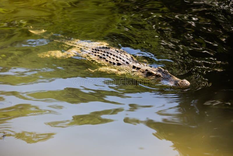 Vattenkroppar på krokodilen brukar i Dalat vietnam royaltyfria bilder