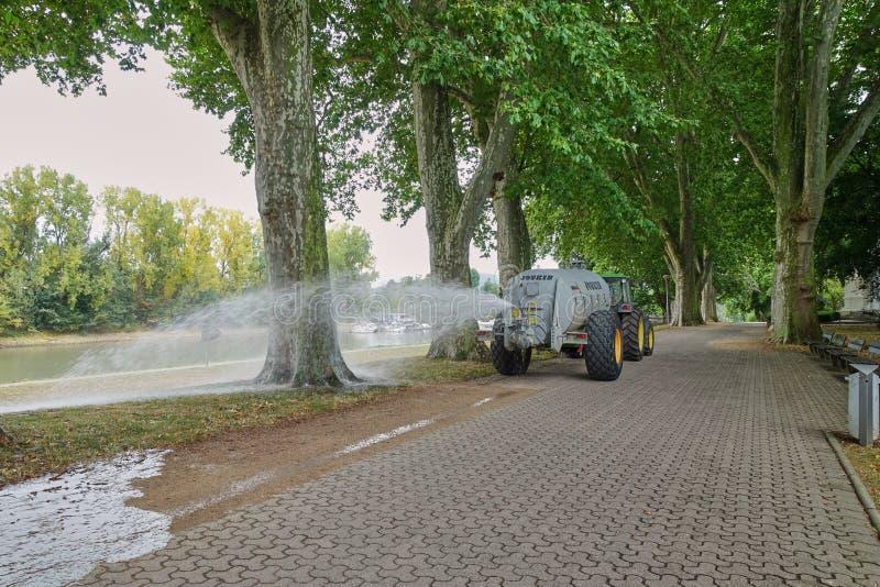 Vattenlastbil i handling under torkan som bevattnar gamla träd royaltyfria bilder