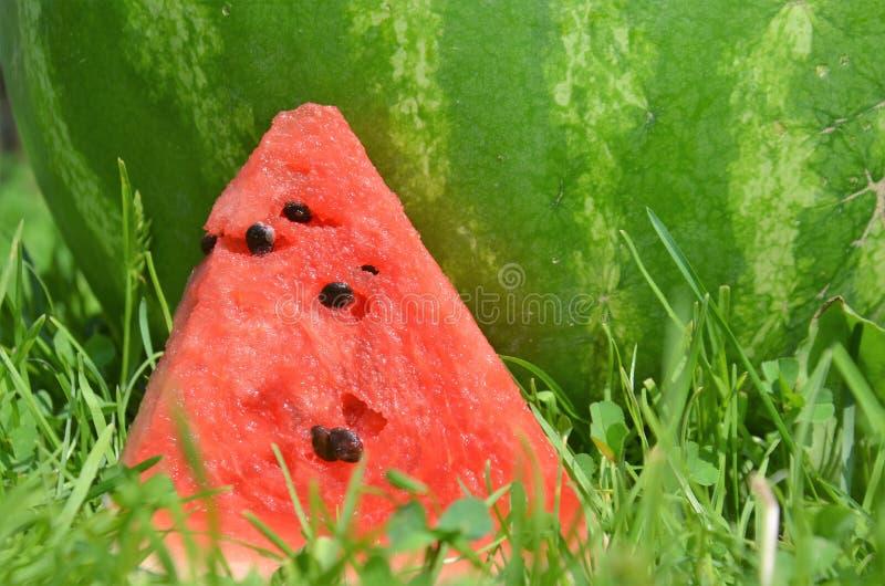 vattenmelon 5 arkivfoton