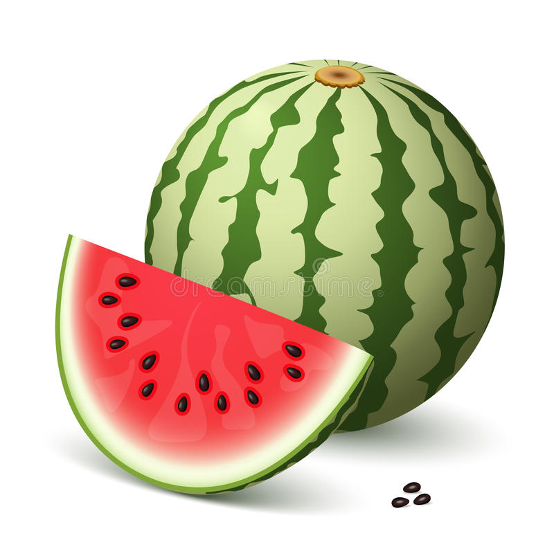 vattenmelon stock illustrationer