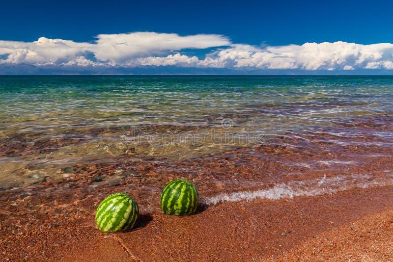 Vattenmelon på kusten fotografering för bildbyråer