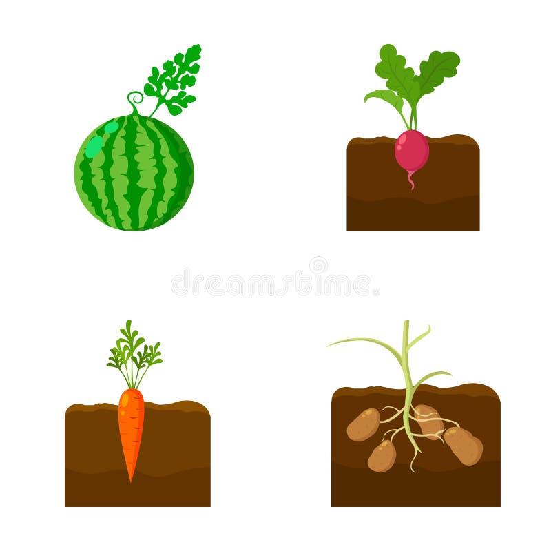 Vattenmelon rädisa, morötter, potatisar Lagerför fastställda samlingssymboler för växt i symbol för tecknad filmstilvektor illust vektor illustrationer