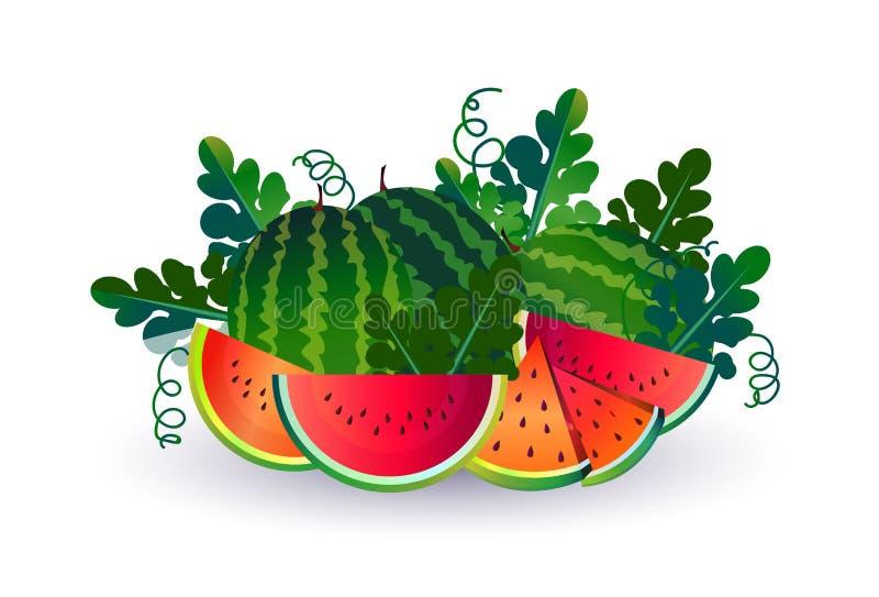 Vattenmelonfrukt på vit bakgrund, sund livsstil eller bantar begreppet, logoen för nya frukter royaltyfri illustrationer