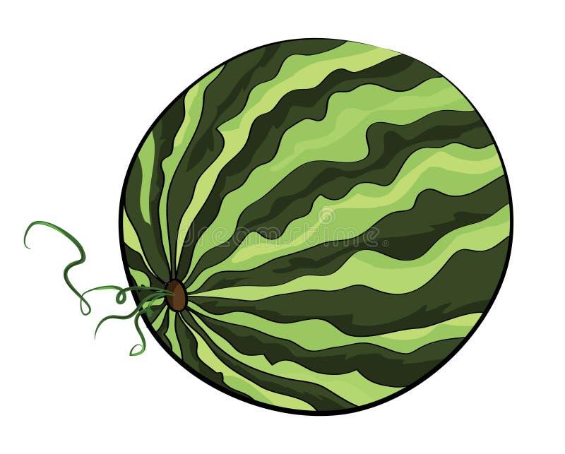 Vattenmelonillustration stock illustrationer