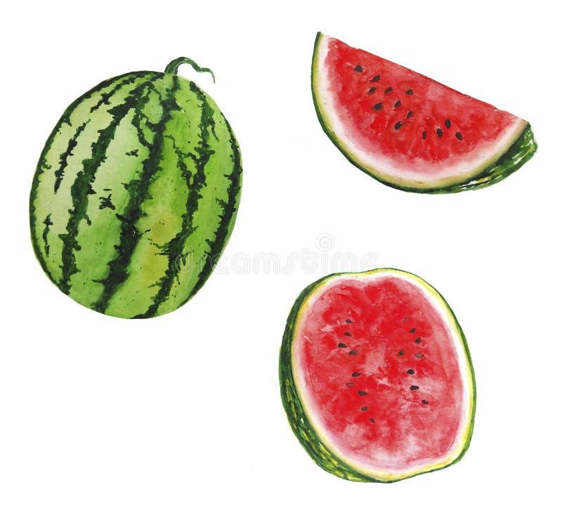 Vattenmelonvattenfärgillustrationer ställde in av för garneringhälsning för sommar botanisk design för kort vektor illustrationer