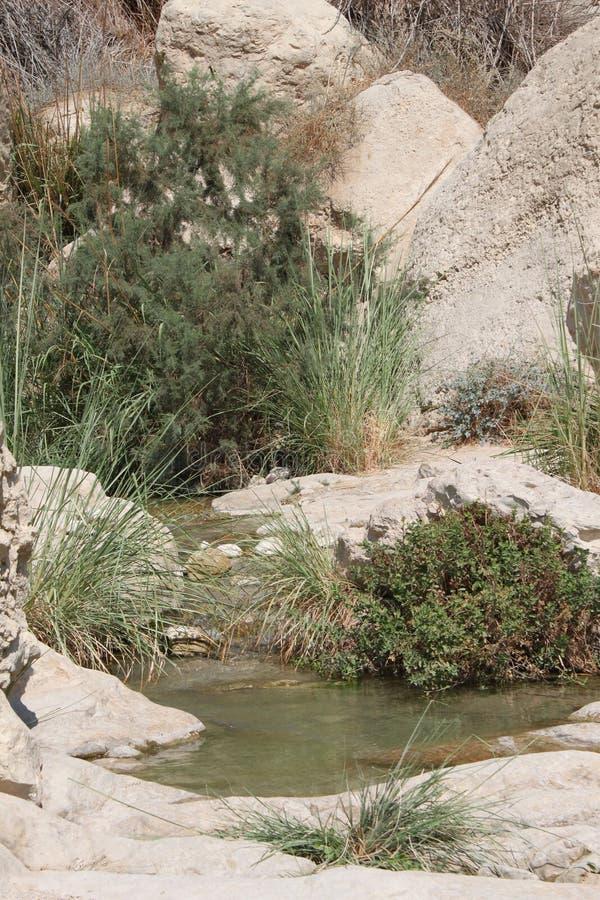 Vattenpöl på David Brook Waterfalls National Park, dött hav, Israel royaltyfria foton
