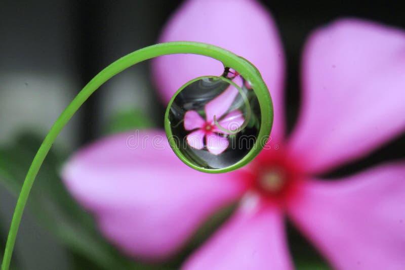 Vattensmå droppar på bladslut upp sikt arkivbild