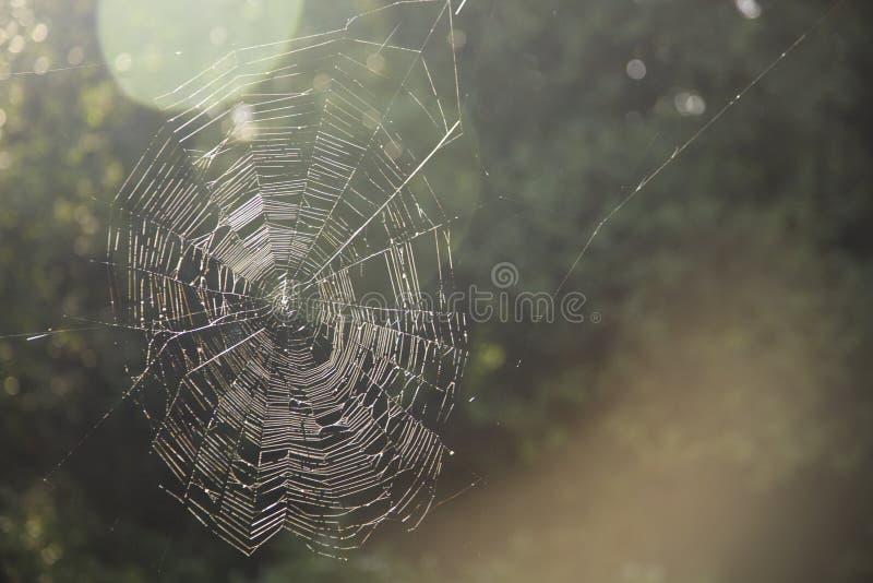 Vattensmå droppar på en spindelrengöringsduk i naturen, spindelnät arkivfoton