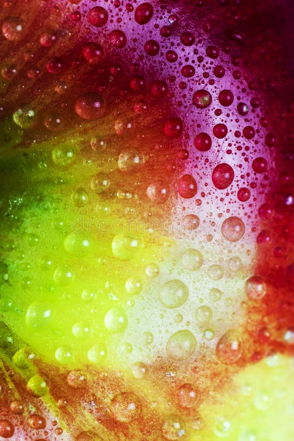 Vattensm? droppar p? makrosikt av det kul?ra ?pplet f?r regnb?ge royaltyfri bild