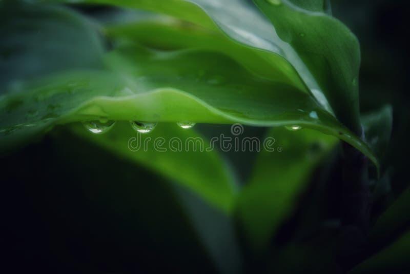 Vattensmå droppar som hänger på ett blad royaltyfri bild