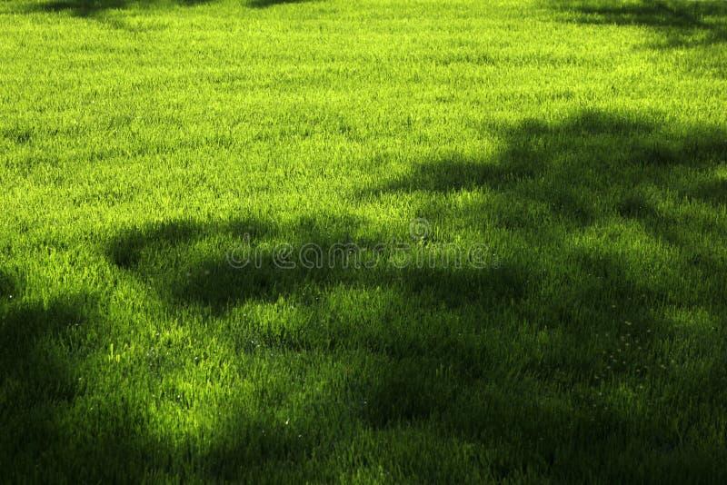 Vattensprinkers i ett fält arkivfoto
