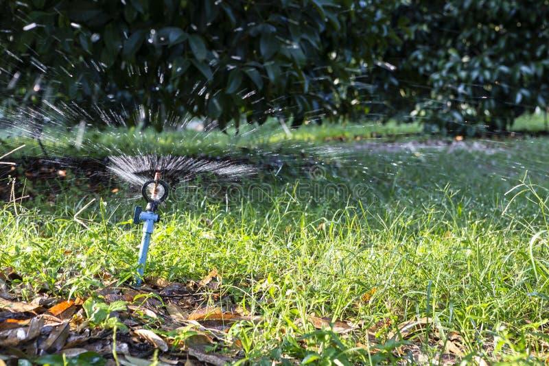 Vattenstänk i fruktträdgården i Thailand royaltyfri fotografi