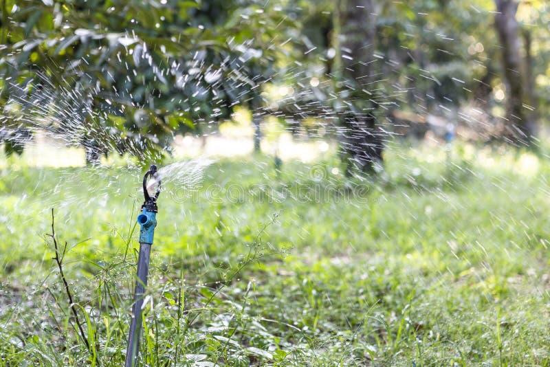 Vattenstänk i tropisk frukt som brukar i Thailand royaltyfria bilder