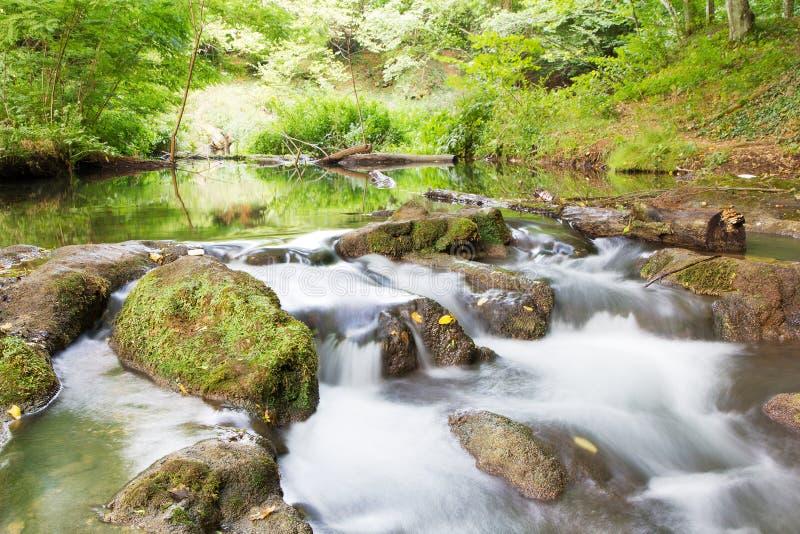 Vattenström i skog royaltyfri fotografi