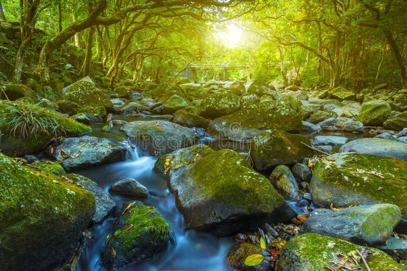 Vattenström i skogfloden royaltyfri bild