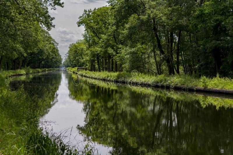 Vattenvägar i Belgien, manmade kanal med ekgränden royaltyfri foto