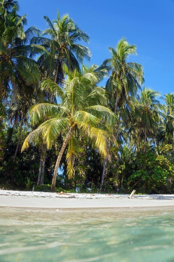 Vattenyttersida och exotisk strand royaltyfria bilder