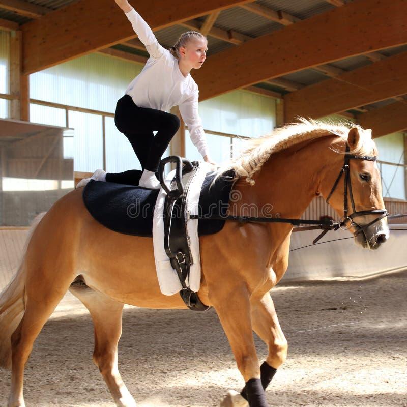 Vaulting op een bruin paard stock foto