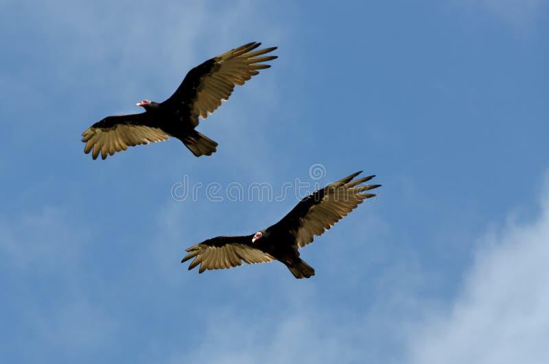 Vautours dans le ciel faisant le vol synchronisé photos stock