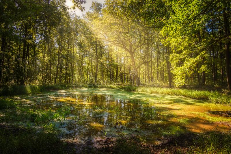 Vautrez-vous dans la forêt dans un jour ensoleillé image libre de droits