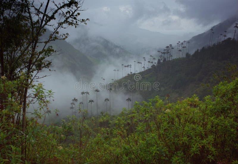 Vaxpalmträd i den Cocora dalen royaltyfri foto
