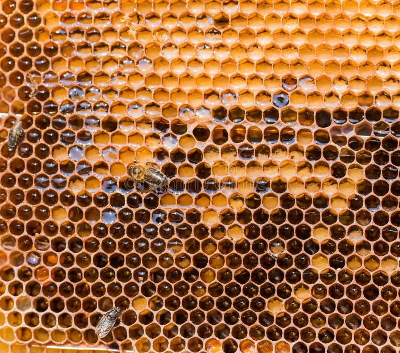 Vaxram, når att ha pumpat honung från dem, tätt upp arkivbilder