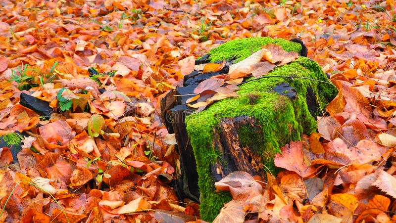 We`ve Seen Better Days. Many leaves that have fallen during a stormy and cold Autumn Day royalty free stock images