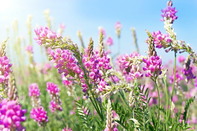 Vea el cielo a través de la hierba verde con las flores rosadas fotos de archivo libres de regalías