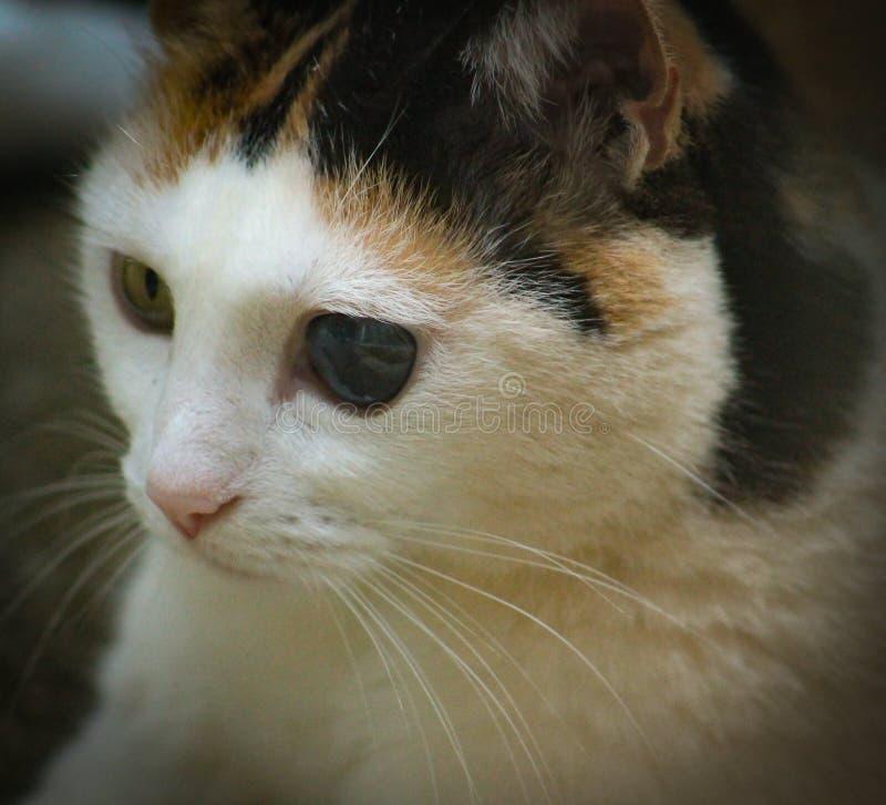 Vea el más-gato fotos de archivo libres de regalías