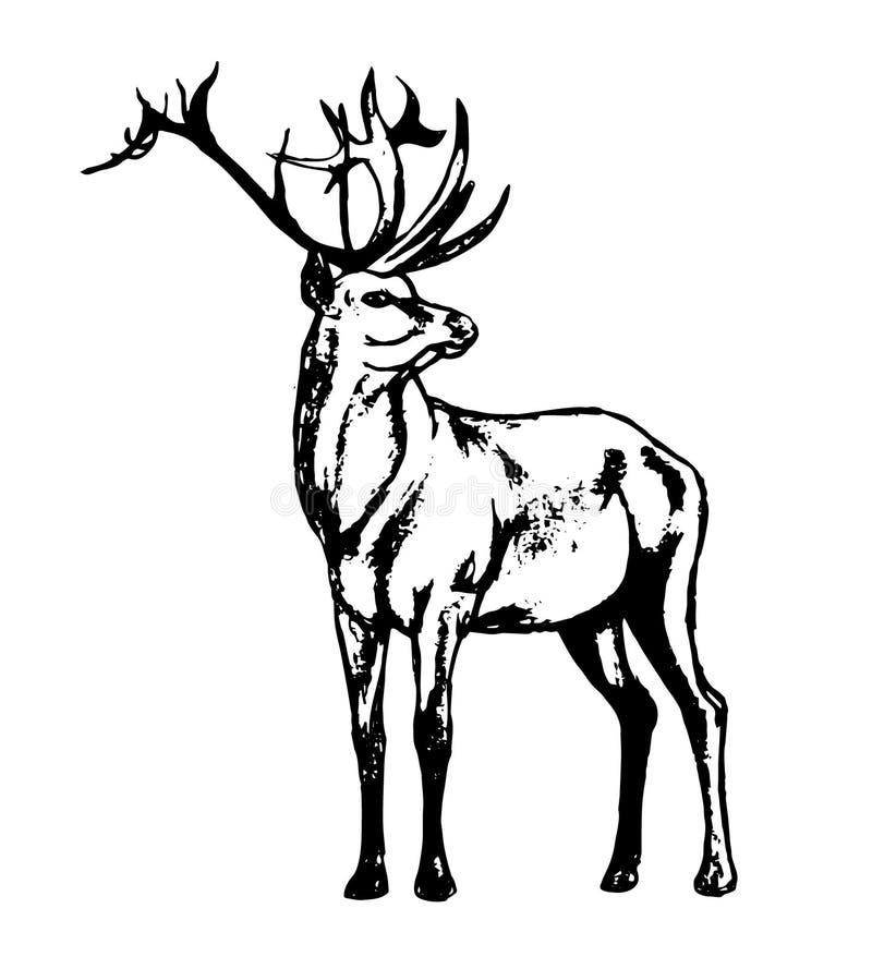 Veados vermelhos - um residente da floresta ilustração do vetor