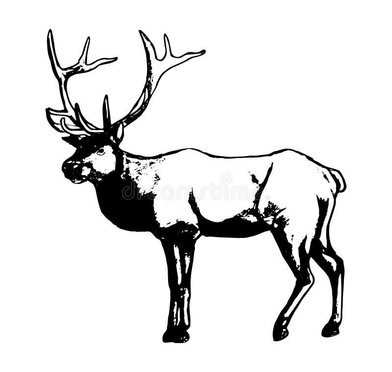 Veados vermelhos - um residente da floresta ilustração royalty free