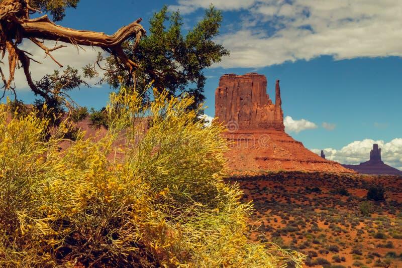 Vecchi albero e rocce, valle del monumento, Utah immagini stock libere da diritti