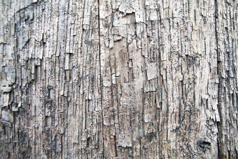 Vecchi bordi della quercia immagini stock