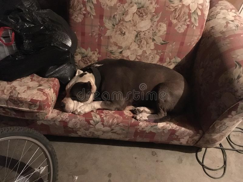 Vecchi cani fotografie stock libere da diritti