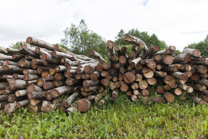 Vecchi ceppi di legno fotografie stock libere da diritti