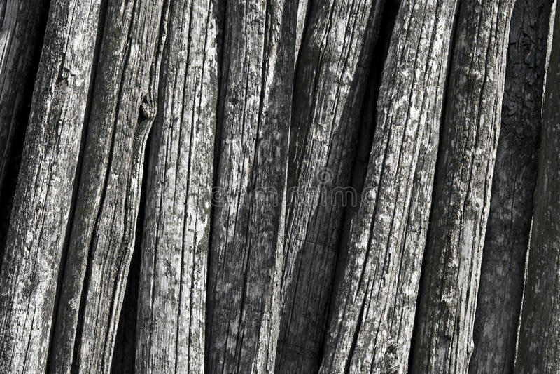 Vecchi circuiti di collegamento dell'acacia fotografia stock libera da diritti