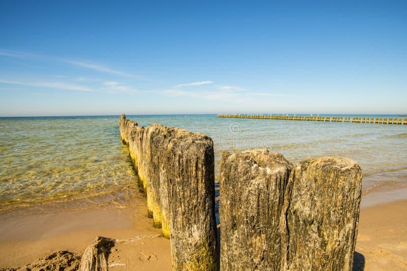 Vecchi inguini nel Mar Baltico immagine stock
