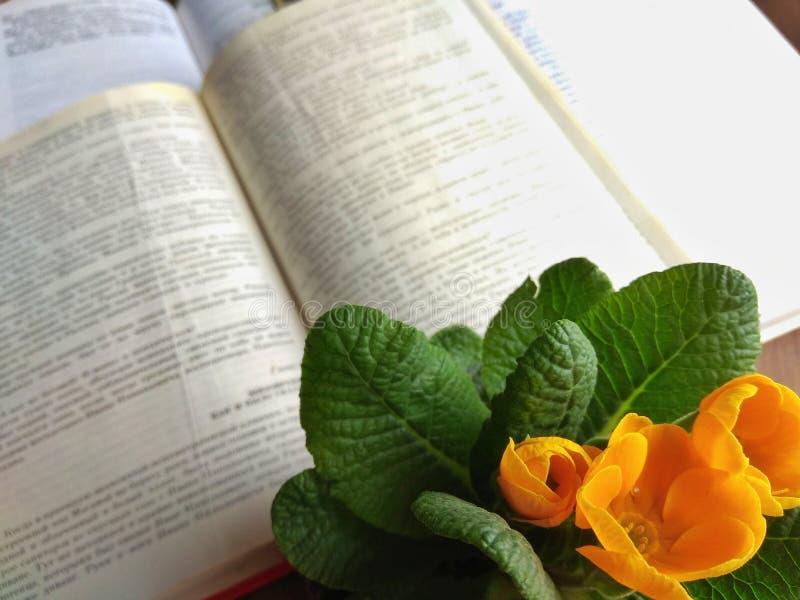 Vecchi libri aperti sul davanzale o sulla tavola con luce del giorno fotografie stock libere da diritti