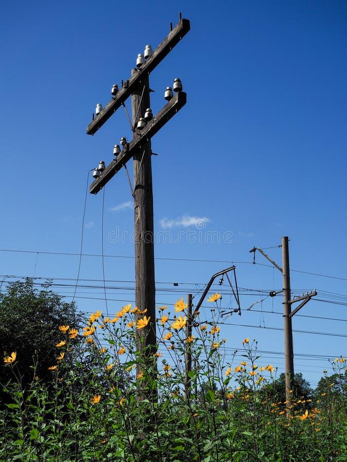 Vecchi pali di telegrafo sulla ferrovia Paesaggio rurale immagini stock