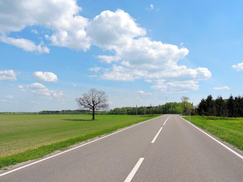 Vecchi quercia, strada e campi in primavera, Lituania immagini stock libere da diritti