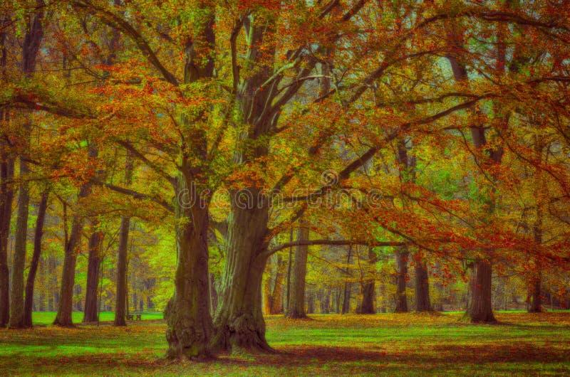 Vecchi vasti della foglia alberi di faggio probabilmente nel parco a luce del giorno di pomeriggio di autunno fotografie stock libere da diritti