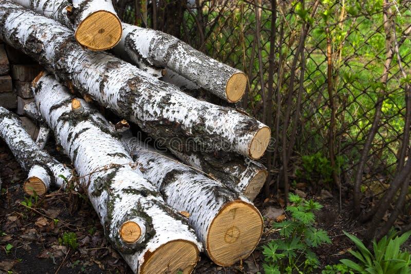 Vecchia betulla tagliata, secca per i bisogni del riscaldamento della fornace immagine stock libera da diritti