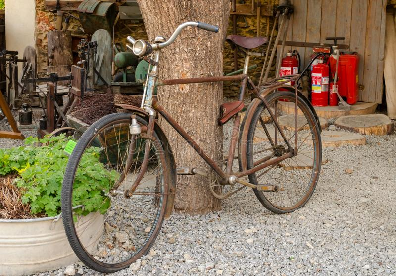 Vecchia bici d'annata arrugginita vicino al grande tronco di albero Zone rurali immagini stock