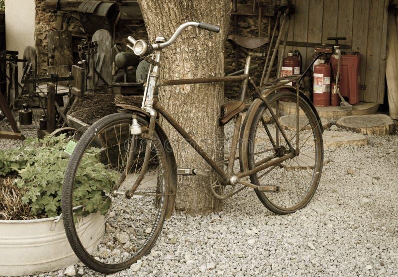 Vecchia bici d'annata arrugginita vicino al grande tronco di albero Zone rurali fotografia stock