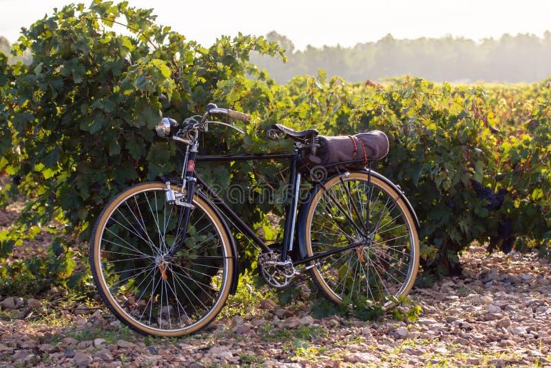 Vecchia bicicletta in una vigna, ad alba dorata nei dels Alforins di Fontanars, cittadina nella provincia di Valencia, Spagna immagini stock libere da diritti