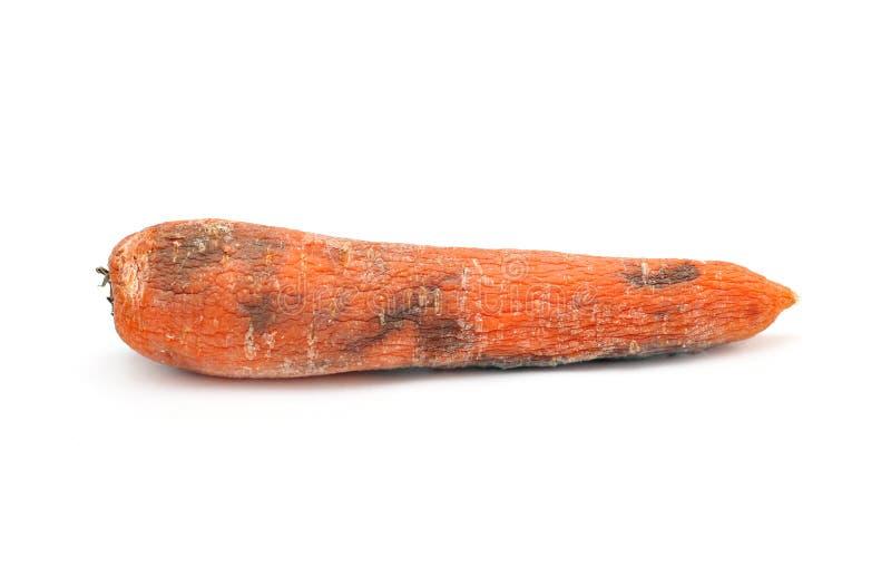 Vecchia carota immagine stock libera da diritti