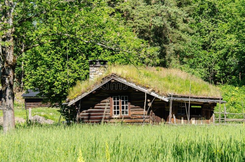 Vecchia casa con erba che cresce sul tetto fotografia stock libera da diritti